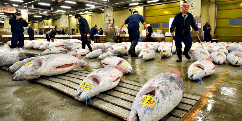 Eighty percent of the world's bluefin tuna is consumed by Japan.