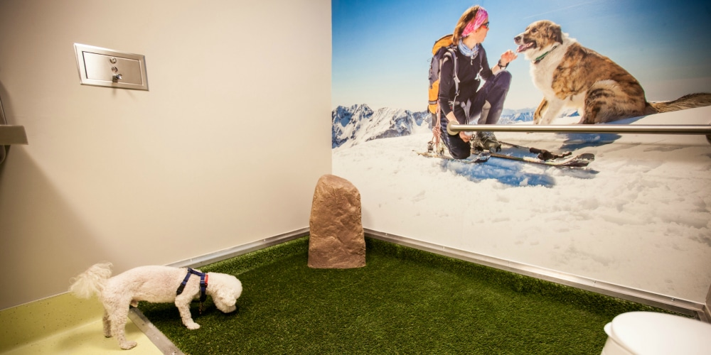 Denver International Airport pet relief zone