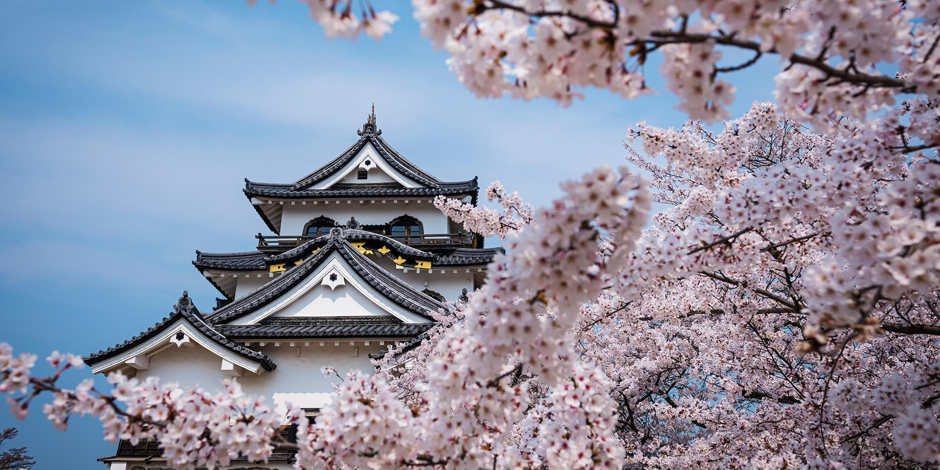 When do cherry blossoms bloom in japan marriott traveler japanese cherry blossoms mightylinksfo